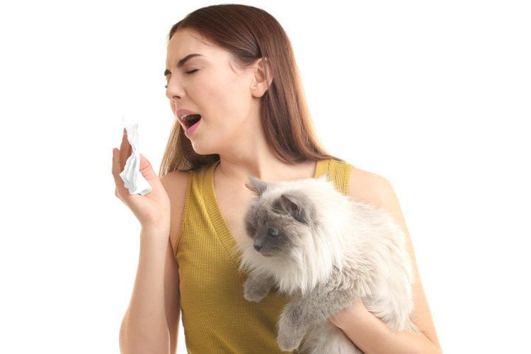 Девушка чихает от кошачей шерсти