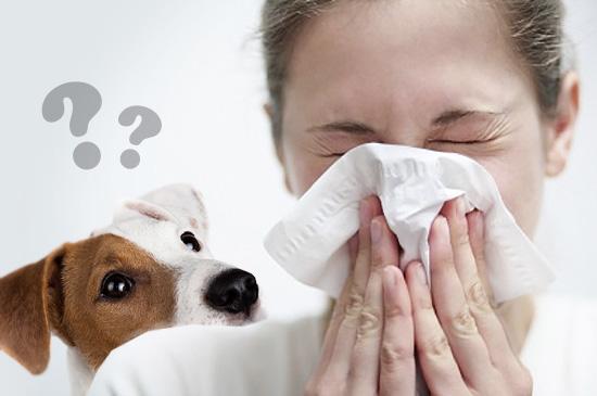 Откуда берется аллергия на домашних животных?